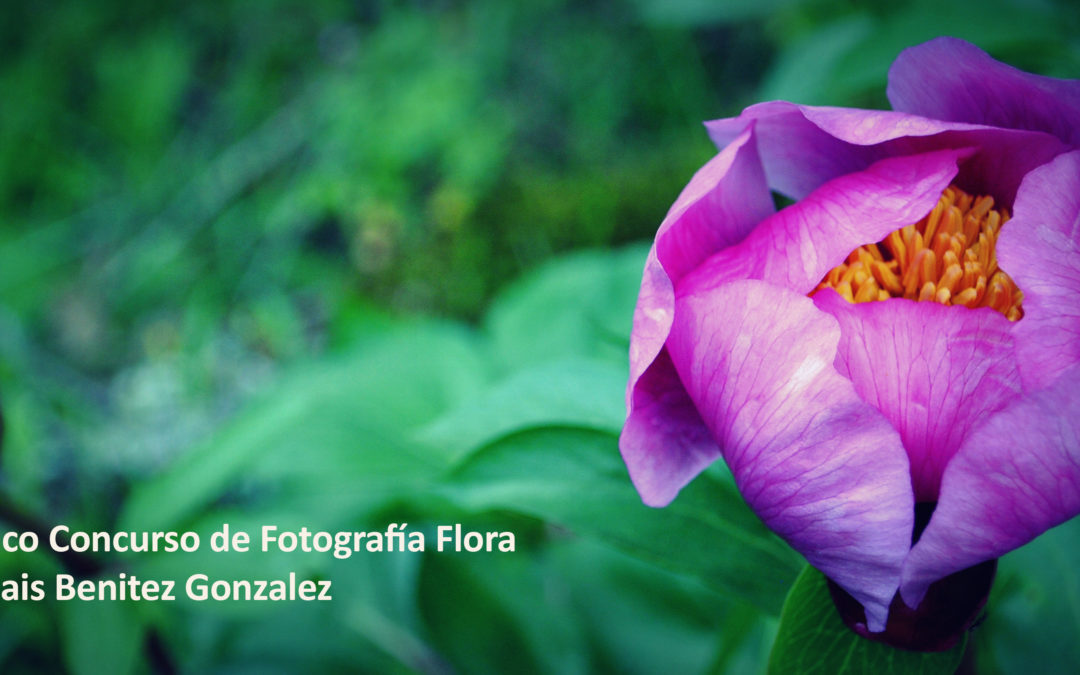 Premios Concursos de Fotografía «El Membrillo…» y «Flora de la Subbética»